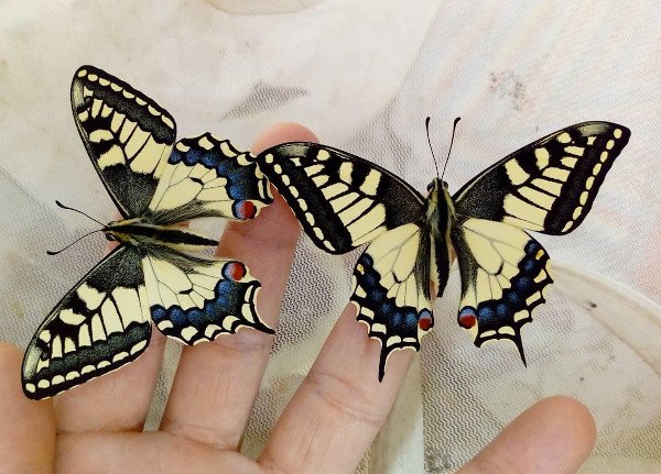 papilio machaon papilionidae butterfly
