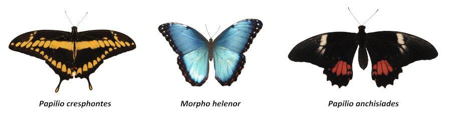 Butterflies from Costa Rica